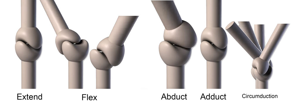 What is a saddle joint?